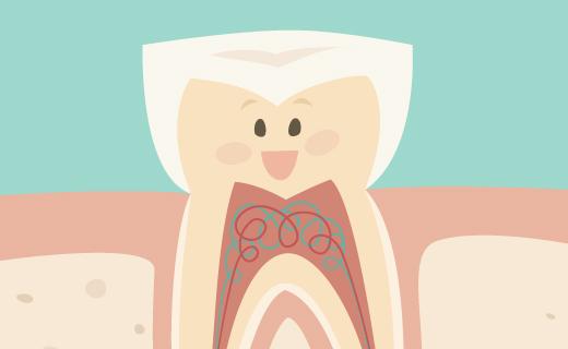dca-blog_article-22_meet-your-teeth