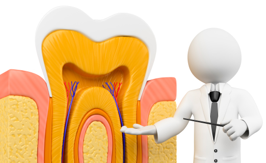 dca-blog_root-canal-3d-model